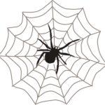 夢占い「蜘蛛(クモ)の夢」の意味とは