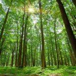 夢占い「森の夢」の意味とは